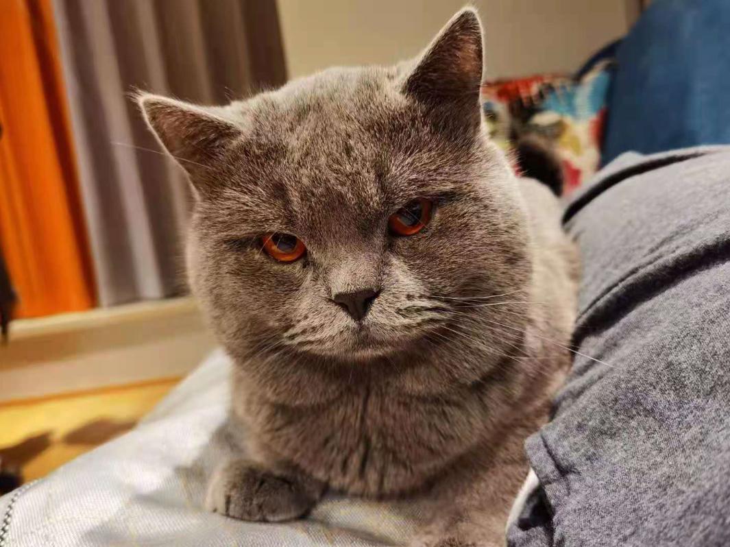 你家的猫,来自地狱