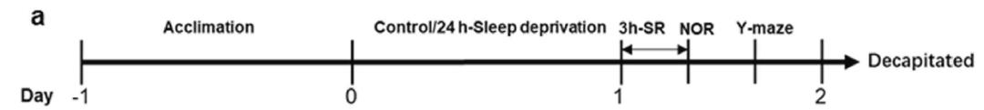 《自然》子刊:熬夜毁脑子,肠菌也有锅!北医六院科学家发现,睡眠剥夺会引起肠菌紊乱,促炎伤脑,导致认知功能受损丨科学大发现